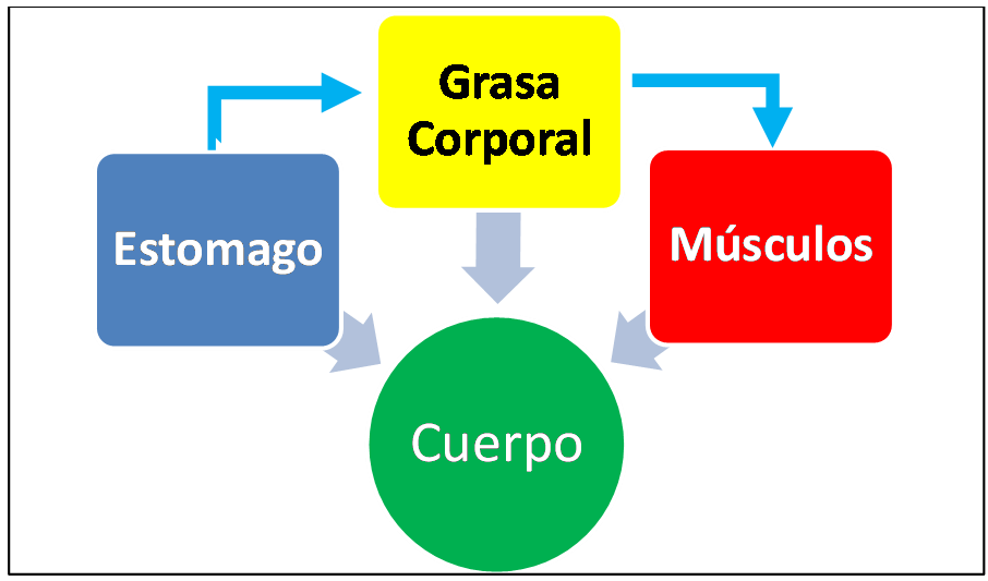 COMO PERDER GRASA Y GANAR MUSCULO AL MISMO TIEMPO | Alternalego