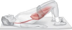 Músculos involucrados con el ejercicio de puente (bridge) –calistenia-, muscles involved in the bridge exercise –calithenics-bodyweight training-