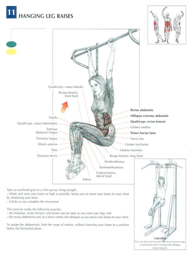 Músculos involucrados con el ejercicio de la elevación de piernas (leg raises) –calistenia-, muscles involved in the leg raises exercise –calithenics-bodyweight training-