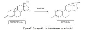 COMO LA AROMATOSA  CONVIERTE LA TESTOSTERONA EN ESTRADIOL, HORMONAS