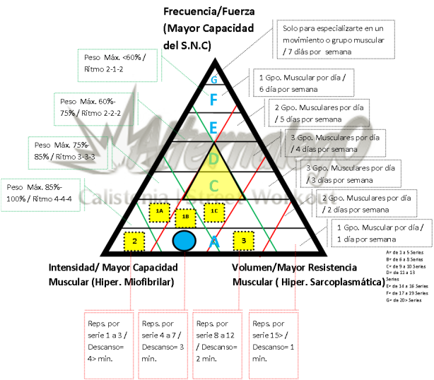 Grafica Relación frecuencia, intensidad y volumen, matriz de planeación y revisión de rutinas, alternalego.com, alternalego, imagen rutina nivel 0 principiantes opciones rutina